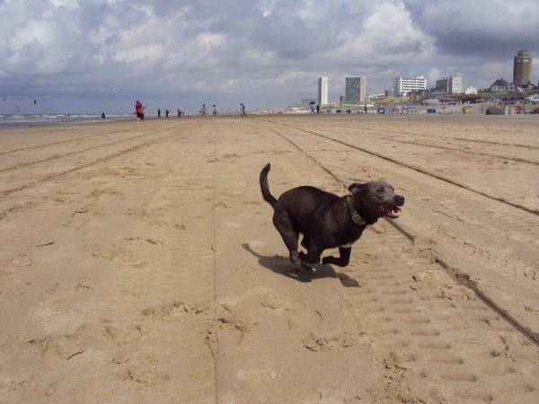 Running_dog_at_the_beach